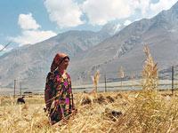Абонентов таджикского Beeline отключили от стационарных телефонов